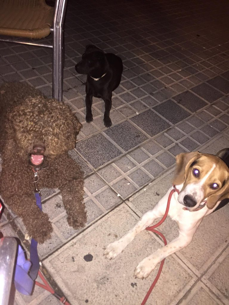 perros tranquilos en una terraza