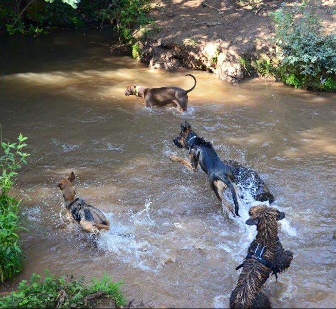 perros disfrutando de un día de campo