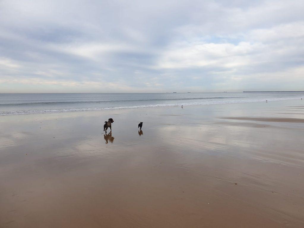 perros disfrutando de un dia de playa